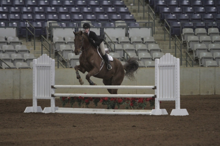 Jumping fences at the show